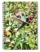 Hummingbird In Flight Spiral Notebook