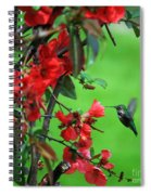 Hummingbird In The Flowering Quince - Digital Painting Spiral Notebook