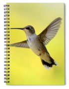 Hummingbird In Yellow Spiral Notebook