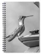 Hummingbird Intrigue  Spiral Notebook