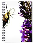 Hummingbird Moth Spiral Notebook