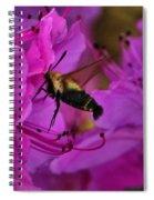 Hummingbird Moth On Azalea Spiral Notebook