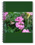 Hummingbird Moth On Pink Verbena Spiral Notebook