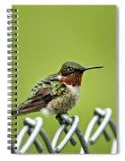 Hummingbird On A Fence Spiral Notebook