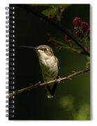 Hummingbird On Blackberry Bush Spiral Notebook