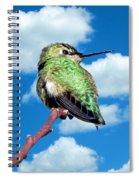 Hummingbird On High Spiral Notebook