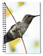 Hummingbird On Tightrope Spiral Notebook