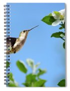 Hummingbird Springtime Spiral Notebook