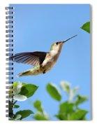 Hummingbird Springtime Spiral Notebook