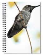 Hummingbird Tongue Spiral Notebook