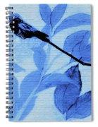 Hummingbird Urban Street Art Spiral Notebook