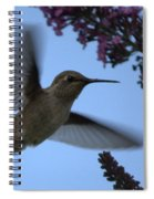 Hummingbird Wings And Butterfly Bush Spiral Notebook