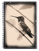 Hummingbird With Old-fashioned Frame 3 Spiral Notebook