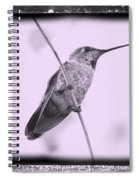 Hummingbird With Old-fashioned Frame 4 Spiral Notebook