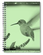 Hummingbird With Old-fashioned Frame 5 Spiral Notebook