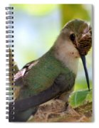 Hummingbird With Small Nest Spiral Notebook