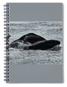 Humpback Fishing Spiral Notebook