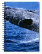 Humpback Full Breach Spiral Notebook