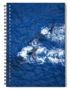 Humpback Whales Aerial Spiral Notebook