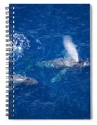 Humpback Whales Spiral Notebook
