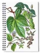Humulus Lupulus, Common Hop Or Hop Spiral Notebook