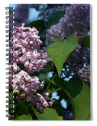Hungarian Lilac 6 Spiral Notebook