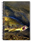 Hungry Carp Spiral Notebook