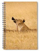 Hungry Lions Spiral Notebook