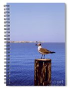 Hungry Sea Gull Spiral Notebook