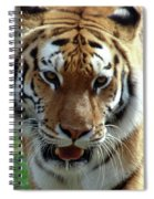 Hungry Tiger Spiral Notebook
