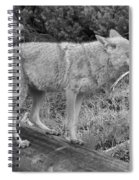Hunting With Ears Back Black And White Spiral Notebook