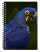 Hyacinth 446 Spiral Notebook