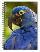 Hyacinth 458 Spiral Notebook