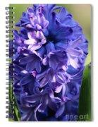 Hyacinth Highlights Spiral Notebook