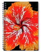 Hybrid Hibiscus II Maui Hawaii Spiral Notebook