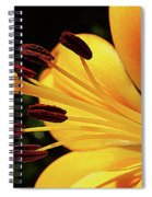 Hybrid Lily Spiral Notebook