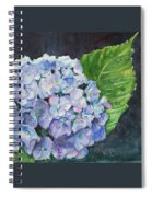 Hydrangea And Water Droplet Spiral Notebook