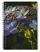 Hydrangea Color Spiral Notebook