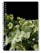 Hydrangea Formal Study Landscape Spiral Notebook