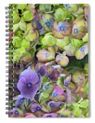 Hydrangea  One Spiral Notebook