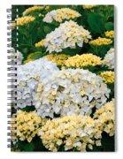 Hydrangeas Blooming Spiral Notebook
