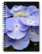 Hydrangeas In Purple Spiral Notebook
