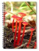 Hygrophorus Cantharellus Spiral Notebook