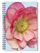 I Am Christmas Rose Spiral Notebook