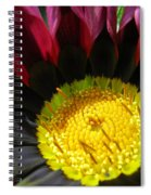 I Was Struck By Her Beauty Spiral Notebook