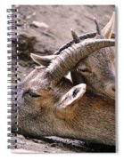 Ibex Mother And Son Spiral Notebook