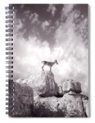 Ibex -the Wild Mountain Goats In The El Torcal Mountains Spain Spiral Notebook
