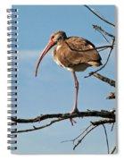Ibis At  Rest Spiral Notebook