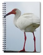 Ibis In The Morning Spiral Notebook