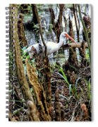Ibis In The Swamp Spiral Notebook
